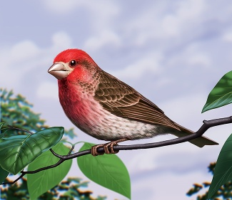 Illustration of a purple finch. (Bird)