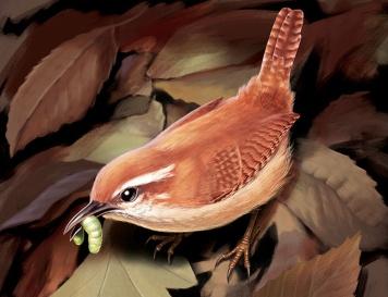 Illustration of a Carolina Wren. Digital art, created in Photoshop.