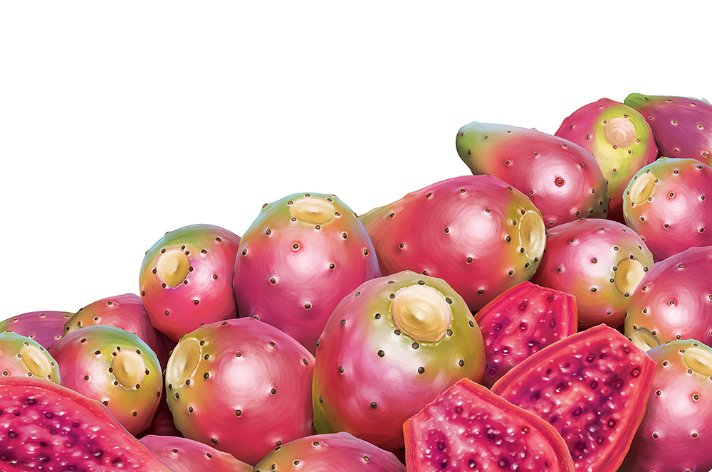 Illustration of a pile of prickly pear fruit.