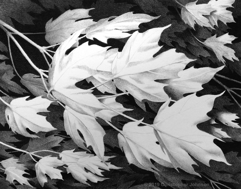 Charcoal and graphite drawing of maple leaves and branches in a breeze. Artwork by Christopher Johnson.